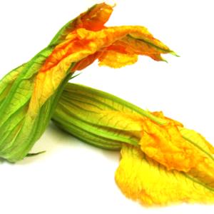 Fiori commestibili - fiori di zucca